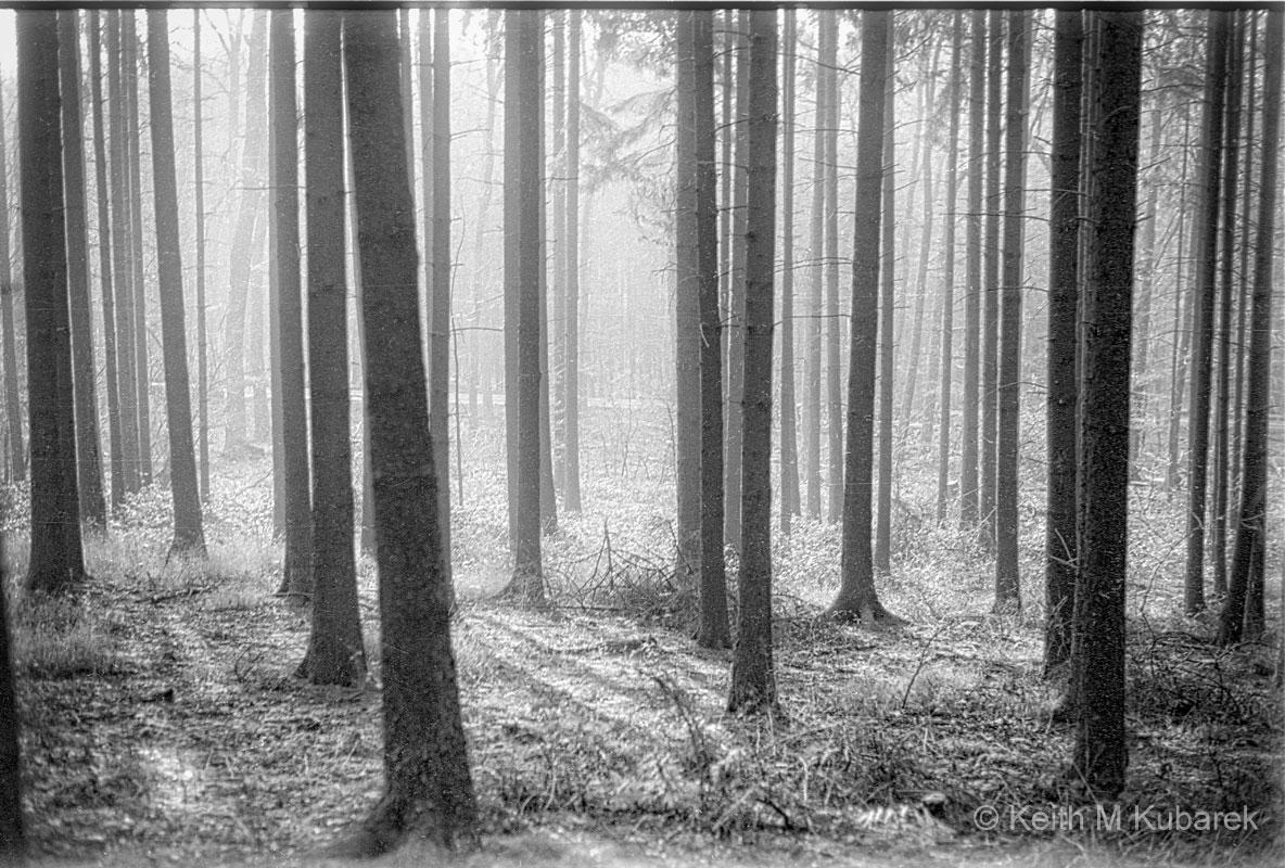 Dornholzhausen Forest